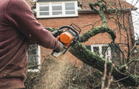 Homeowners Guide to Top Tree Problems