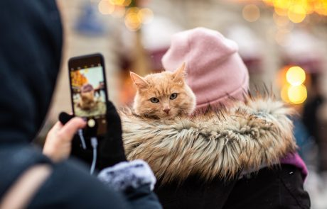 How to Get the Best Pictures of your Pet