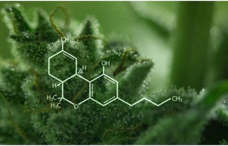 THC and CBD: What's the Difference?