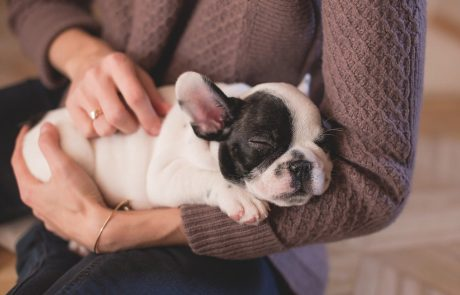 5 Reasons You Should Get a Dog in 2020